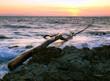 Sea debris