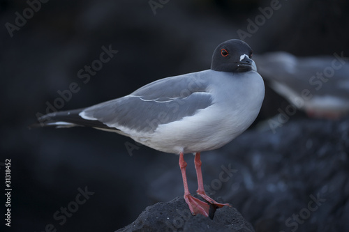 birds on galapagos