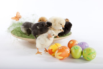 Many baby chicken near Easter eggs