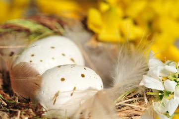 Vogelnest mit Eier, Federn und Blüten