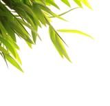 Fototapety Bamboo