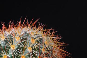 Cactus aislado sobre fondo negro.