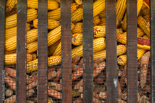 A cage full of yellow corn