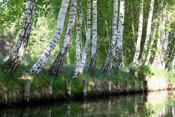 Landschaftliche Idylle im Biosphärenreservat im Spreewald