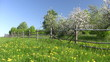 Apple-tree  garden with  wooden fence