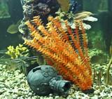 Corals, algae and jug, aquarium poster