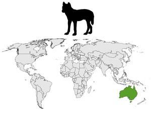 Dingo Verbreitung