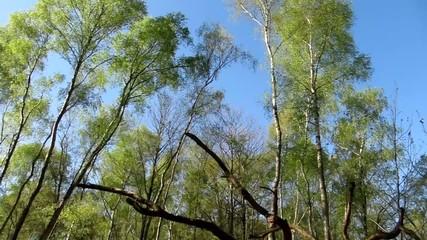 Panoramique sous bois Haut bas