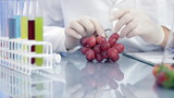 Scientist hands examining grapes and writing results in notepad