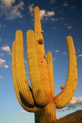 Saguaro NP 1