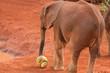 Footballing Elephant