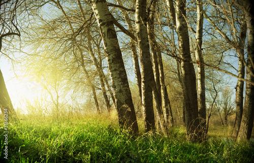 zachod-slonca-i-drzewa
