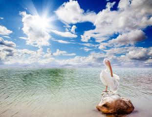 paisaje con pelicano