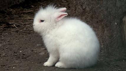 adorable white brabbit