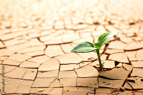 Plant in dried cracked mud - 31371221