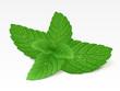 Mint leaf - 31372229
