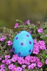 Blaues Osterei mit lila Punkten in der Wiese liegend