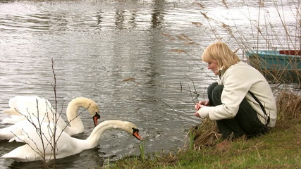 Feeding swans on springtime
