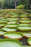 jardin botanique de Pamplemousses, île Maurice