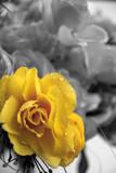 Fiore giallo - 31380881