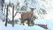 deer winter in  the trees