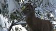deer winter between trees