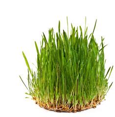 Round grass