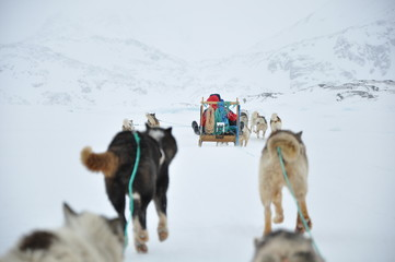 Dog sledging trip in cold snowy winter, Greenland