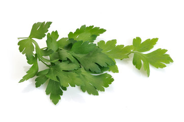Parsley sprigs on white background