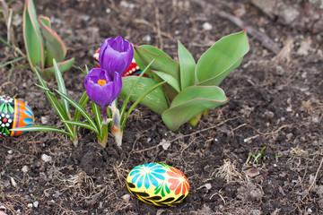 Easter eggs, spring flowers