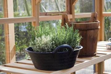 fresh green herbs planted in the pot