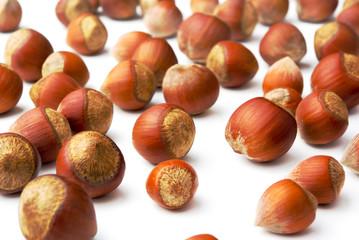 A lot of hazelnuts on a white background