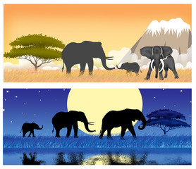 African elephants illustration
