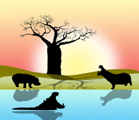 hippopotamus in africa on a sunrise background