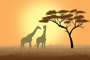 Two giraffes over sunrise near acacia