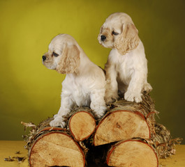 two puppies playing on wood pile