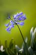 Blumen auf Sommerwiese
