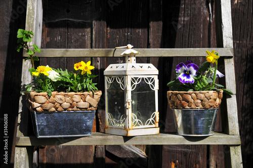 Pflanzen und Laterne