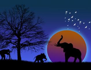Photographer shoot elephants