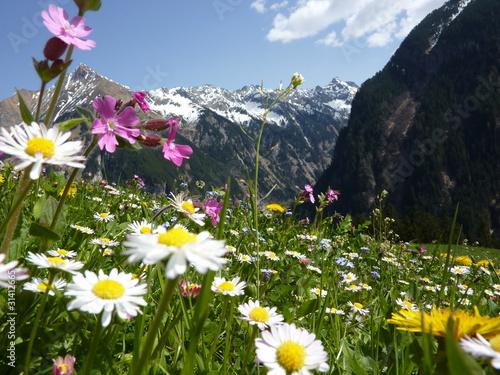 Leinwandbild Motiv Blumenwiese mit Gebirge im Hintergrund