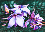 Magnolia koloru pastelowego