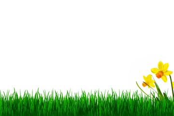 Gras und gelbe Narzissen