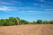 field for tillage