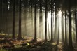 Coniferous forest lit by the morning sun on a foggy autumn day