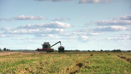 Combine harvester loading grain in trailer