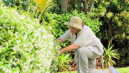 Retired woman  gardening