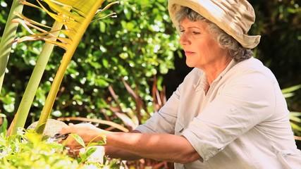 Woman trimming a shrub