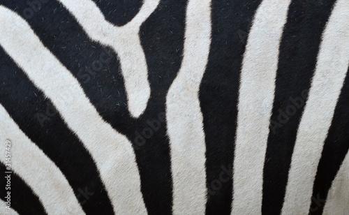 wzor-skory-zebry