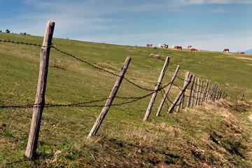 Mandria di cavalli al pascolo in montagna