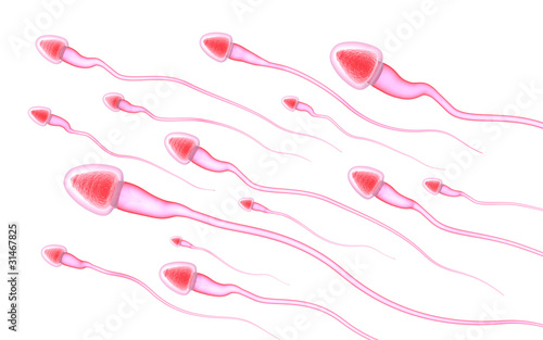 Sperm isolated on white